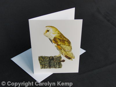 Barn Owl - Old Rotting Post