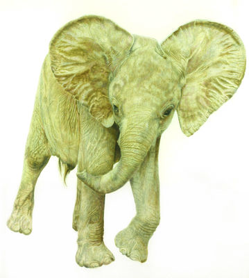 """African Elelphant  """"Oliver, An Orphan with Attitude"""""""