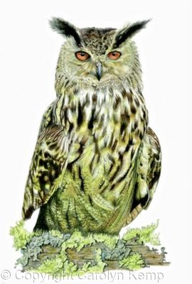 14. Eagle Owl - working up an appetite