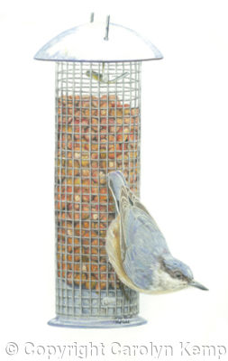15. Nuthatch - ready for take off