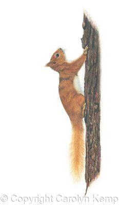 28. Red Squirrel - a quick escape