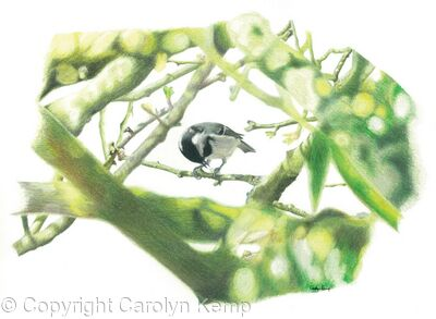 30. Coal Tit - a prized nut