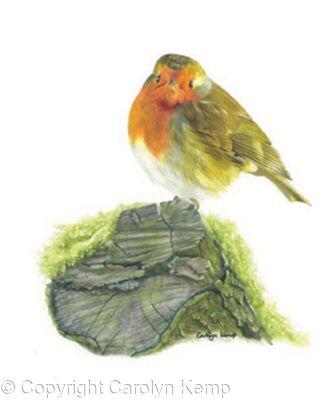 31. Robin - A quiet spot