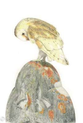 60. Barn Owl – Guarding the graveyard