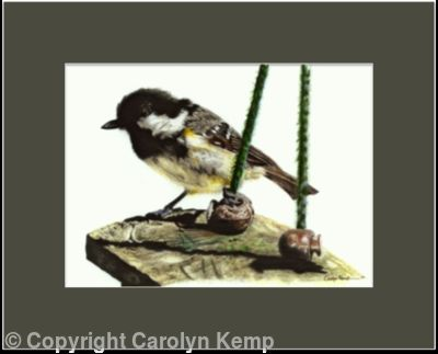 5. Coal tit - waiting its chance