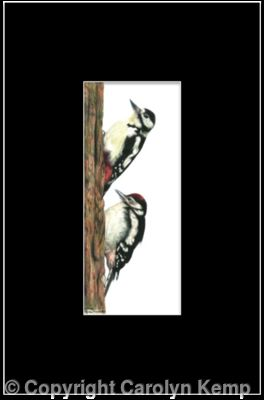 6. Great Spotted Woodpecker - learning the ropes