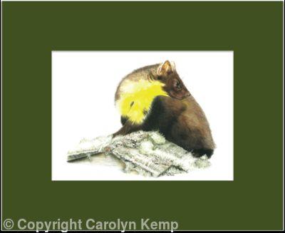 10. Pine Marten - ever alert