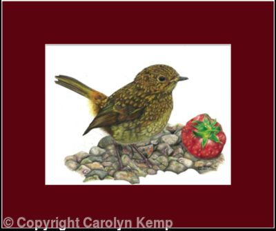 11. Robin - A prized possession