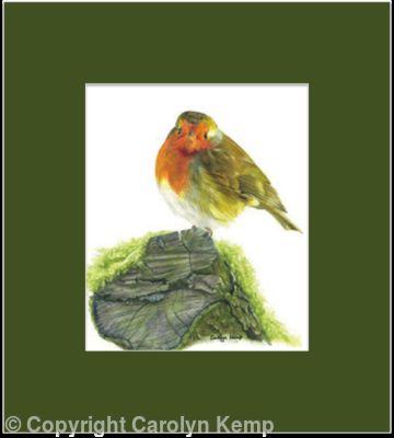31. Robin - A quiet spot.