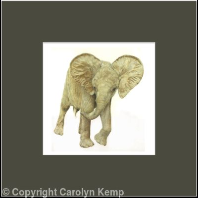 77. African Elelphant – Oliver, An Orphan with Attitude