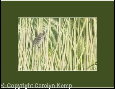 84. Sedge Warbler – A gentle breeze.