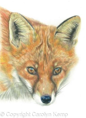 19. Fox - you've been spotted.