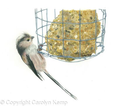 20. Long tailed Tit - breaking in!