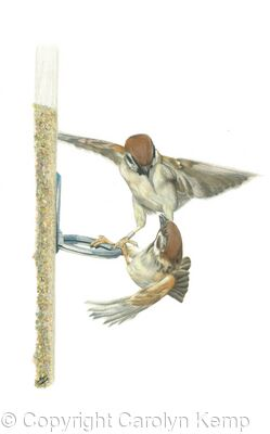 46. Tree Sparrows - Competition is High