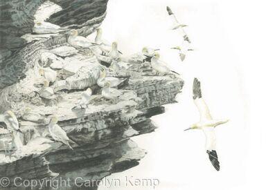 83. Gannets – High Rise