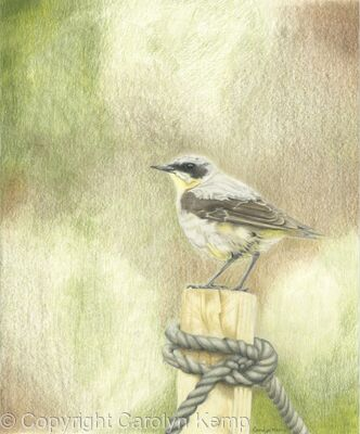 94. Wheatear - Vantage Point