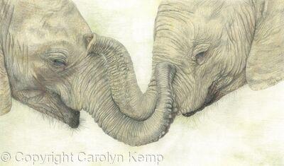 97. Elephants - Friends Comfort
