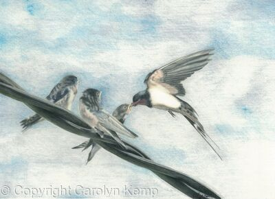98. Swallows - On the wing