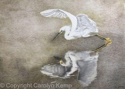 107. Little Egret - Elegant Refletion