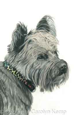 Cairn Terrier - Charming Charlie