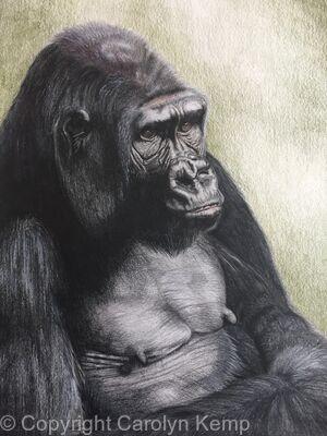 109. Gorilla