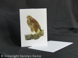 Buzzard - Taking a rest