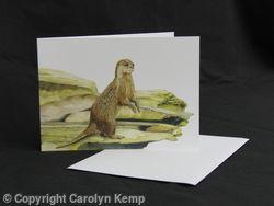 Otter - Vantage Point