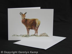 Red Deer - Solitary Figure