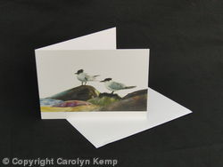 Sandwich Terns - Taking a breather