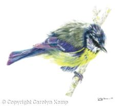 3. Blue tit - Just out of the bath