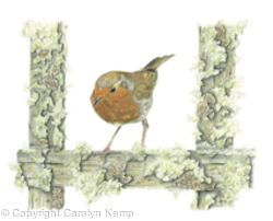 32. Robin - in the frame