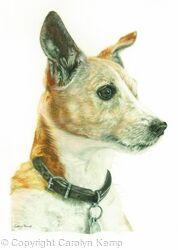 78. Jack Russel - Is that toast?