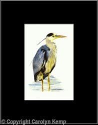 7. Grey Heron - silently watching