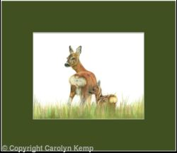 56. Roe Deer – Mother and child