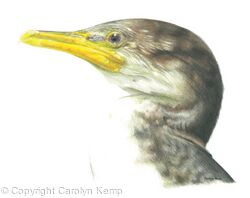 24. Cormorant - playing the waiting game