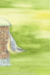 25. Nuthatch - Summers Day