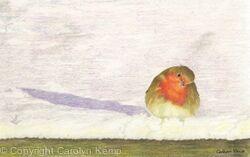 41. Robin - a winters sunset