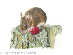 49. Field Mouse - One fine grape