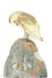 60. Barn Owl – Guarding the graveyard.