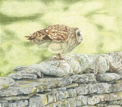 65. Short eared owl – a great launch pad