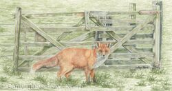 73. Fox – Gate keeper