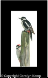 50. Great Spotted Woodpeckers - Favorite post