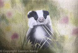 103. Badger - Inquisitive