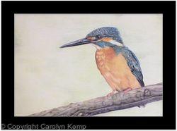 105. Kingfisher - Splash of Colour
