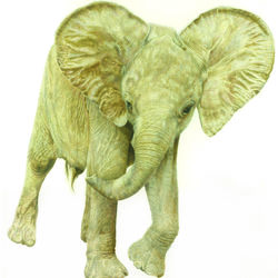 "African Elelphant  ""Oliver, An Orphan with Attitude"""