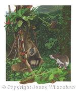 The Island of Bioko