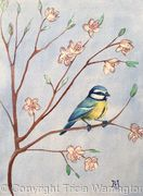 Blue Tit with plum blossom