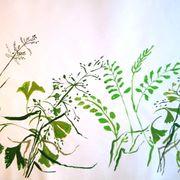 leaf tangle