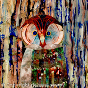 Wise Owl?