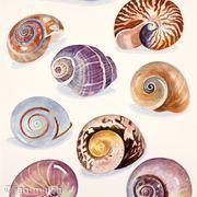 Shells Spirals